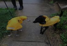 Best-Dog-Raincoats