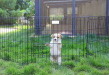 best-dog-Playpens