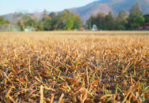 growing-grass-in-a-dry-climate