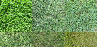 Choosing The Right Grass For Your Yard