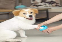 Best-dog-paw-cleaners-and-paw-washers-for-dirty-paws