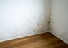 empty room in a new apartment with wooden floors and white walls and a serious mildew and mold problem