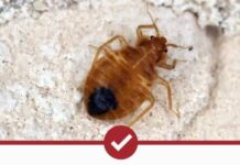 Best Bed Bug Bombs and Foggers