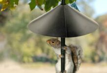 Best Squirrel Baffle