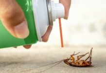 How to Get Rid of American Cockroaches