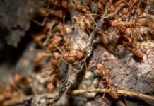 How-to-Get-Rid-of-Ant-Hills