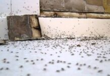 How-to-Get-Rid-of-Ants-in-the-Bathroom