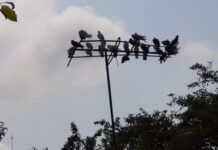 How to Get Rid of Birds