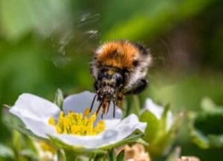 How-to-Get-Rid-of-Bumble-Bees