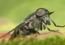 How to Get Rid of Horse Flies