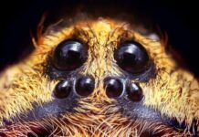 Wolf-Spiders