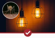 are-mosquitoes-attracted-to-light