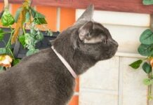 best-flea-and-tick-collars-for-cats