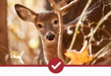 Best Deer Repellents