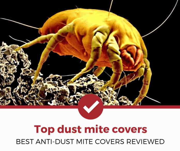 Best Dust Mite Covers