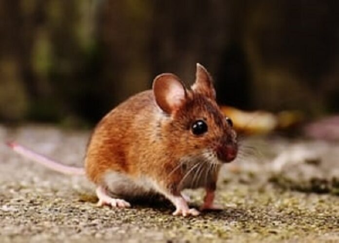 Best Mouse Poisons