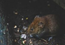 Best Vole Repellent