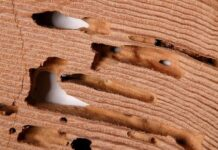 How to Get Rid of Drywood Termites