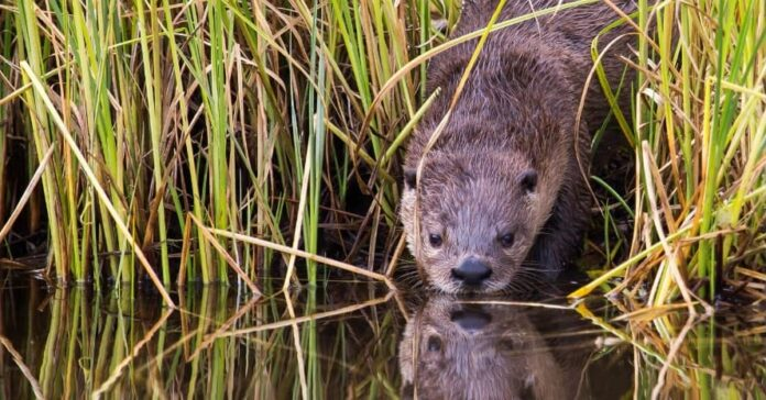 weasel-near-the-river